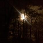 #54 – Moonlight