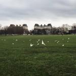 #49: Birds