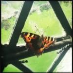 #56: Butterfly