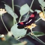 #84 – Butterfly