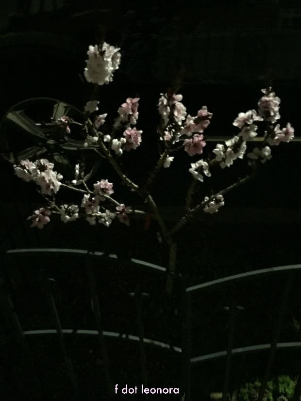 flowersatnight