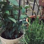 #72: Garden