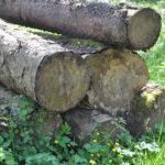 #132 – Log Pile