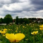 Buttercups and Storm Clouds