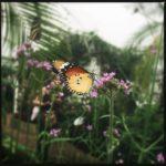 #174: Butterfly [2]