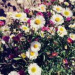 #163: Wild flowers