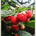 #165: Raspberry