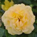 #208 – In Bloom