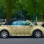 Leopard Beetle
