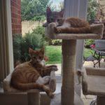 #234: Kittens