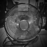 #238: Fan