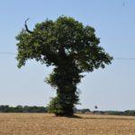 #258 – Tree