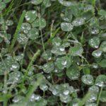 #259 – Droplets