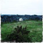 #259: Sheep [2]