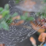 #293 – Web