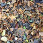 #301 – Fallen Leaves