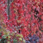 #287 – Red Cascade