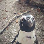#276: Penguin