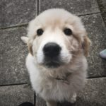#285: Puppy