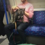 #294: Tube pup