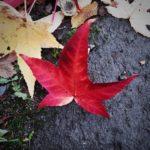 #325: Leaf