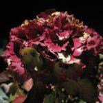 #320 – Night Bloom