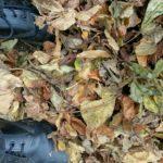 #321 – Fallen Leaves