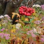 #340 – Frozen Berries