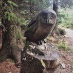 #365: Owl