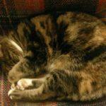 #349 – Cat Nap