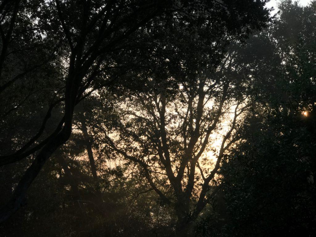 sun_peaking