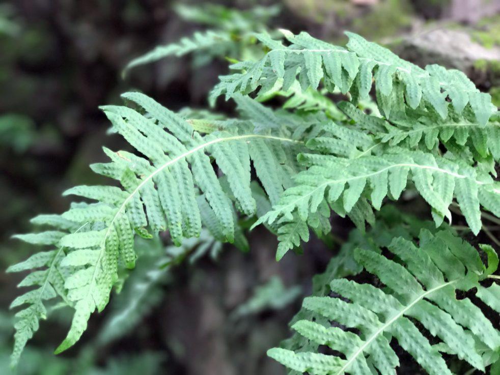 texture, ferns