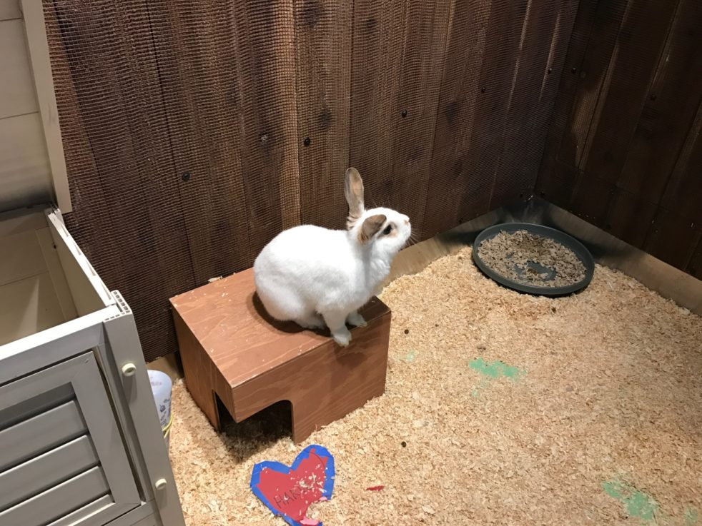 Harvey,rabbit